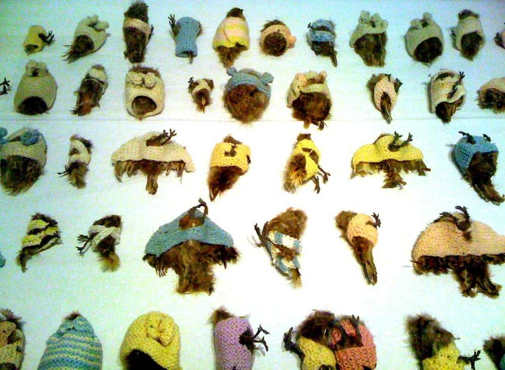 Taxidermy birds in little knitted sweaters by Annette Messager.