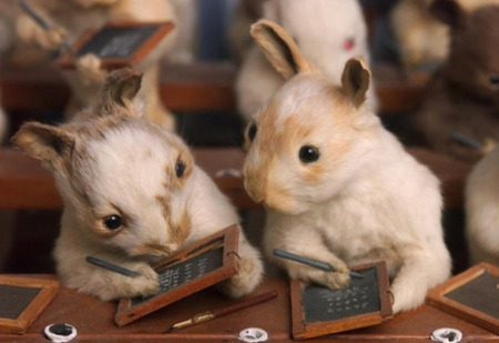 Taxidermy rabbits with little school slates, by Walter Potter.