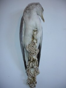 "Jane Howarth, ""Mae"" from 'Bonne Bouche' series. Taxidermied seagull with pearls and jewels."