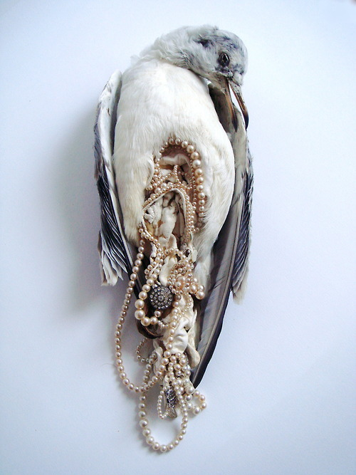 Jane Howarth, 'Bonne Bouche' series. Taxidermied seagull with pearl innards.