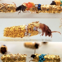 The bejeweled bugs of Hubert Duprat