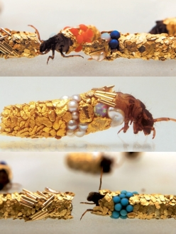 Caddis flies crawl out of gold and jewel encrusted casings, by Hubert Duprat.