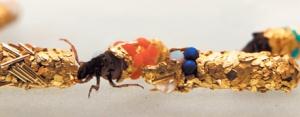 hubert duprat caddisfly bejeweled bugs