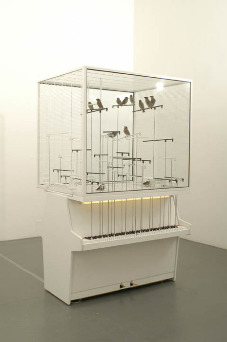 Canaries playing pianos in Robert Gligorov's, 'Dollar Note', 2006.