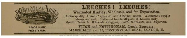 Leeches! Leeches! Advertisement for Fitch and Nottingham Leech Breeders in London, England. 19th century.