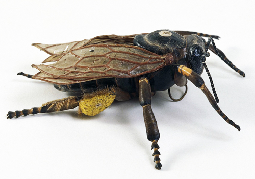 19th century papier-mâché anatomical model of a worker bee made by Dr. Louis Thomas Jerôme Auzoux