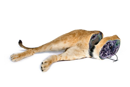 Bottom half of a taxidermy lion filled with amethyst.