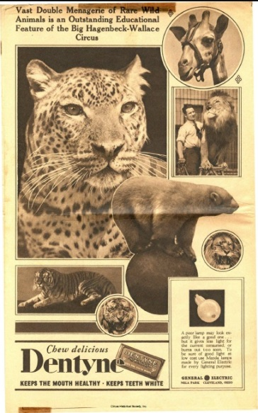 Photographs of wild animals and ad for Dentyne gum.