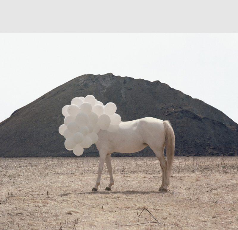 Surreal photo by Andrea Galvan of white horse with white balloons covering head.