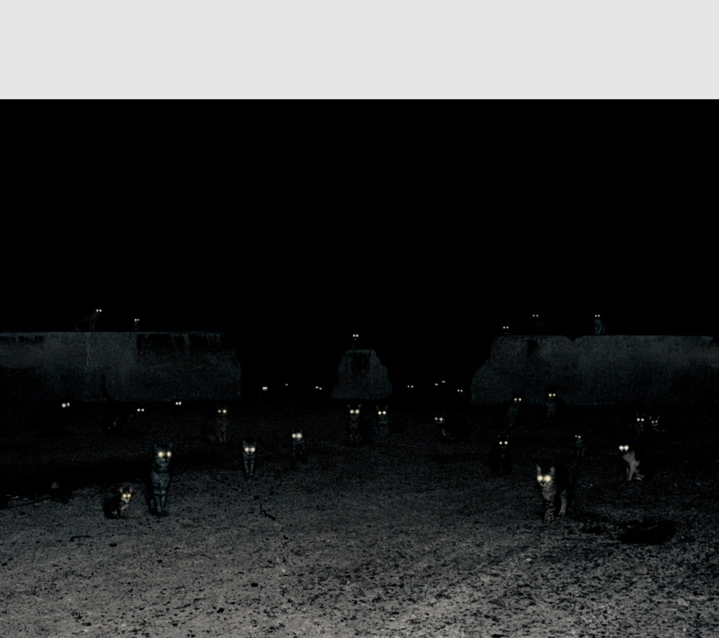 Photograph by Andrea Galvani of cats eyes glowing in dark night scene.