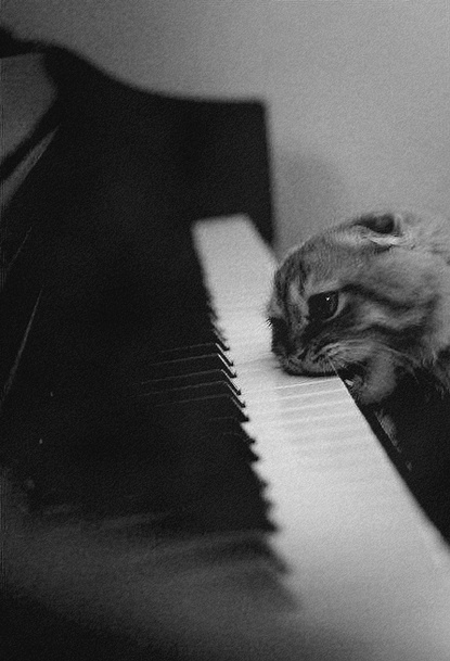 Kitten chomping on the keyboard of a piano.