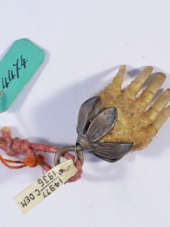 Picture of a small mole paw with a metal flower mount, with museum tags.