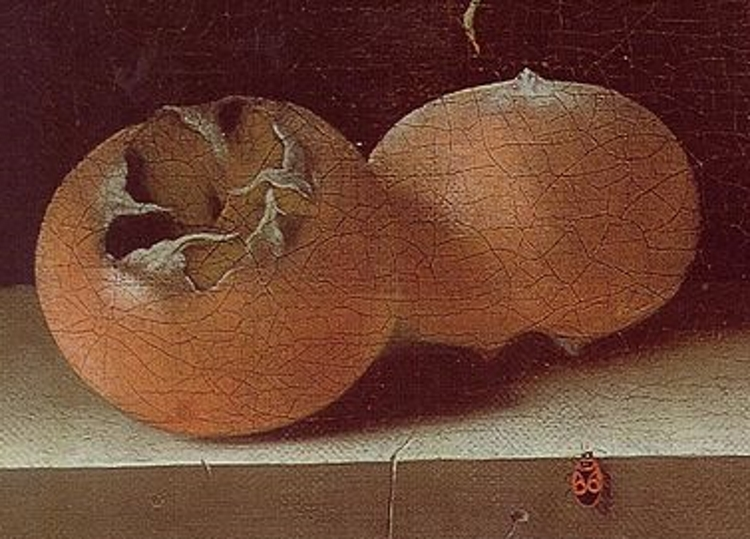 Detail of two medlar fruits from Adriaen Coorte's 1687 still life. A small insect with the artist's initials can be spotted in the corner.