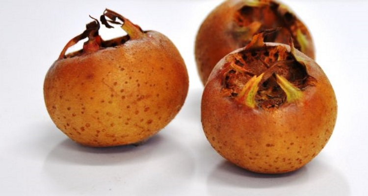 Photograph of three medlar fruits