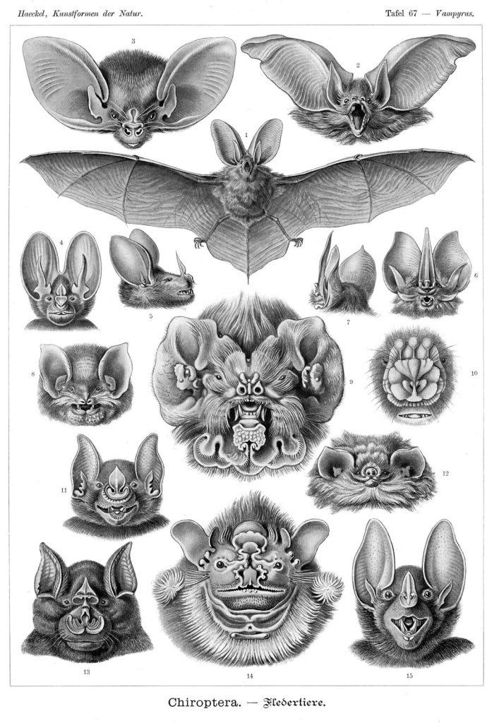 Illustration of bats